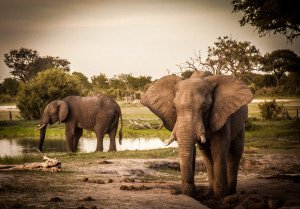 Elephants in Hwange National Park in Zimbabwe